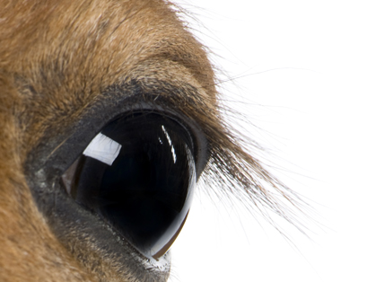 Addressing More Risk Factors of Veterinary Suicide