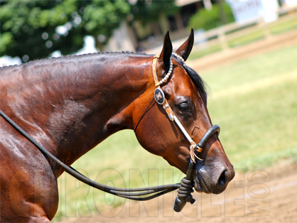 Get to Know a Few of the Horses in the 2013 Equine Chronicle Congress Masters