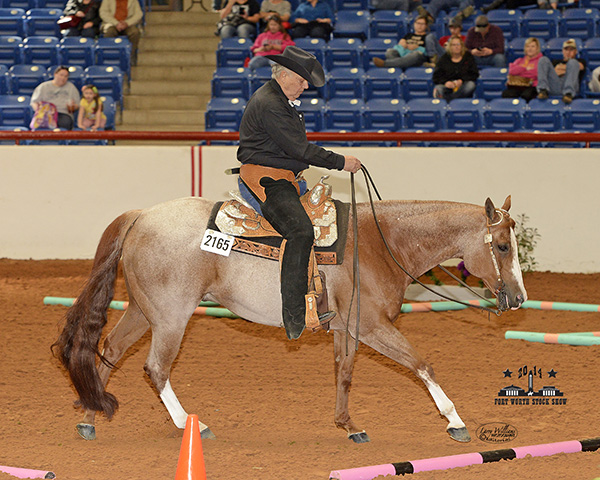 2014 Around the Ring Photos From Ft. Worth Stock Show- APHA POR
