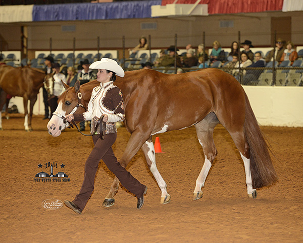 Highpoint Results From 2014 Fort Worth Stock Show- APHA Horse Show