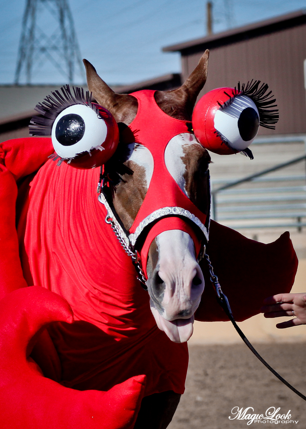 Competitors Clothed In Creative Costumes For Charity Equine Chronicle