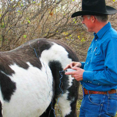 Acupuncture: A Useful Treatment for Horses