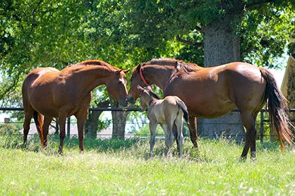 Feeding the Breeding Farm: Part 1- Stallions