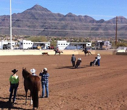 Novice Amateur Showmanship Class + Escapee Steer = New Event- Cowmanship!