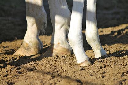 Equine Lameness: The Basics