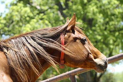 Equine Welfare is Everyone's Responsibility