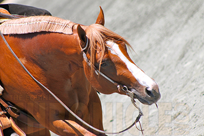 AQHA Stallion Mechanic Will Stand to the Public at Dry River Ranch Starting Feb. 1st, Will Make Debut in English Events
