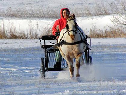 """""""Dashing Through the Snow In A One-Horse Open Sleigh""""… Literally"""