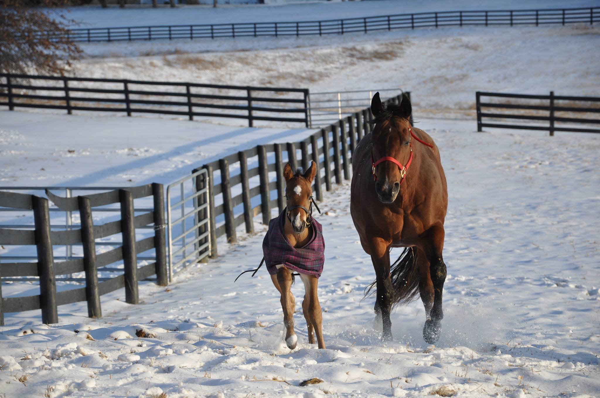 EC Foal Photo of the Day: Snow Day!
