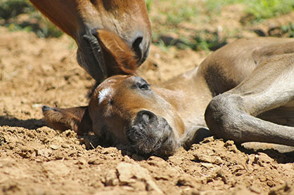 """""""Newborn Foals – What to Expect and When to Worry"""""""