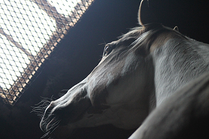 One Study Shows Tapeworm Eggs Associated With Colic