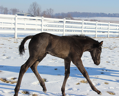 EC Foal Photo of the Day: Two For One! Fraternal Twins