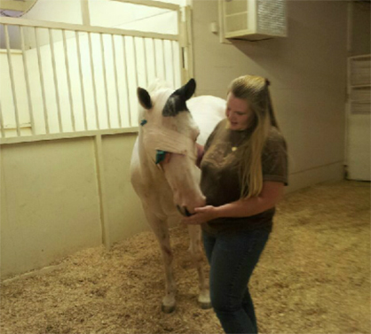 APHA Member Who Lost Horse to Cancer Honors His Memory by Raising Awareness With Non-Profit Organization