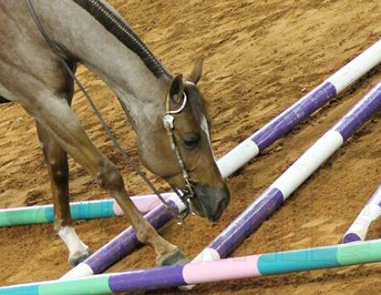 Taking Steps Towards Tendon Regeneration in Horses