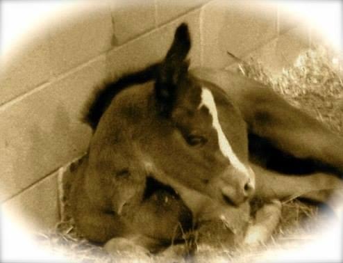 Mister GQ's Last Hurrah: A Surprise Foal!
