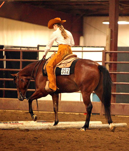 AQHA High Point Youth Ranch Pleasure Horse, PHBA WC Mare, Res. WC AQHA Halter Stallion Will Sell in Pro Horse March Online Auction
