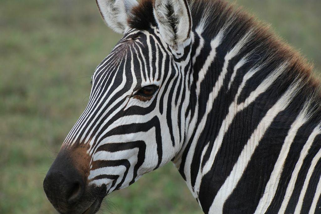 Join AQHA Amateur, Lauren Levy, on an Exotic African Safari