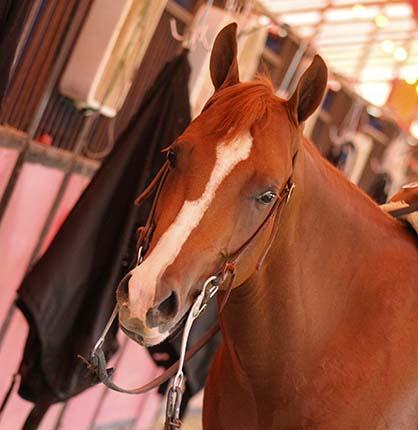 Antibiotic Resistance in Horses?
