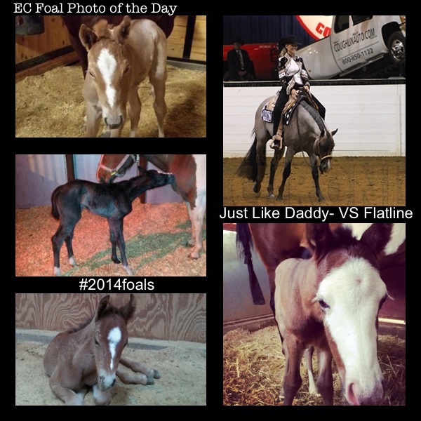 EC Foal Photo of the Day- Just Like Daddy- VS Flatline