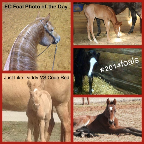 EC Foal Photos of the Day: Just Like Daddy- VS Code Red
