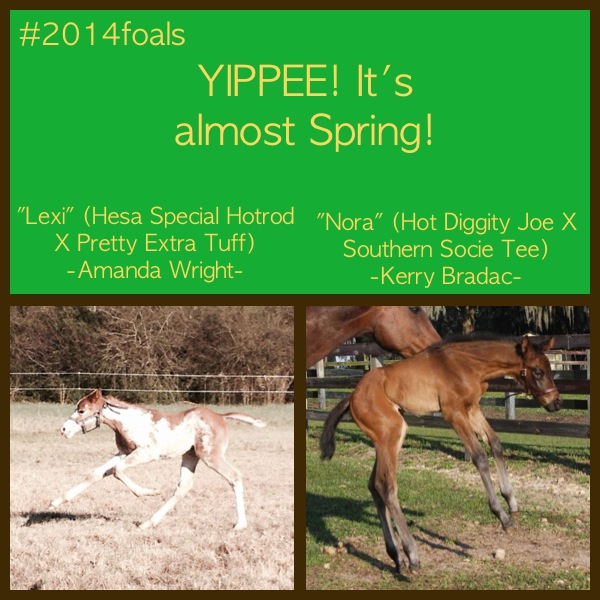 EC Foal Photo of the Day- It's Almost Spring!