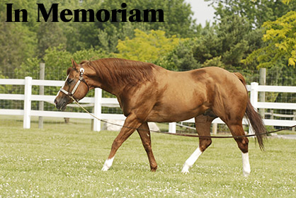 Lori Watkins Reflects on the Passing of Notable AQHA Sire, Vested Pine