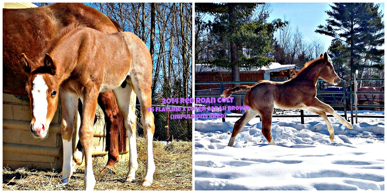 EC Foal Photo of the Day