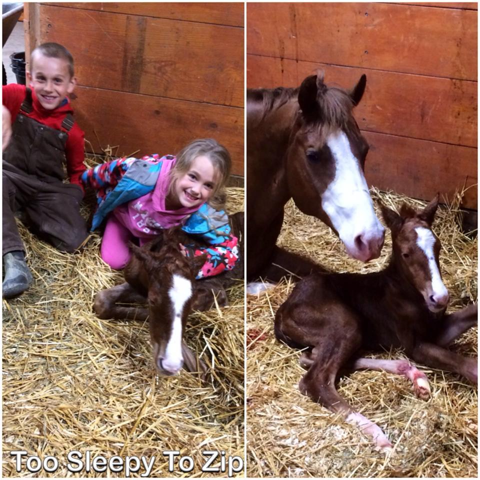 2014 EC Foal Photo Gallery