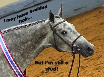 "Hilarious Encounters With ""Non-Horse Show"" Folk"