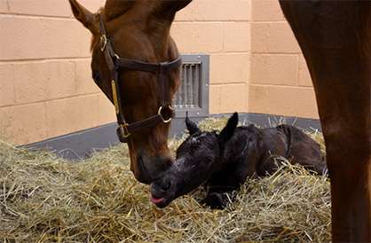 More Than 133,000 People From 112 Countries Tuned in to Watch Birth of Foal Online
