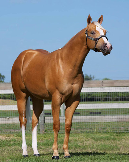 Pro Horse April Online Auction Features PHBA World Champion, Top Prospects, and Show Horses