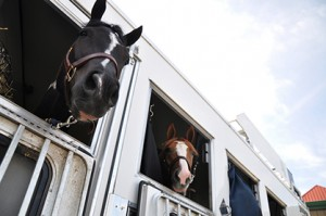Horses arriving for the 2013 PtHA World Show. Image courtesy of PtHA