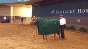 "Pete Kyle retired A Ruf Gal after their performance to ""Courtesy of the Red, White, and Blue"" by unsaddling her in the middle of Alltech Arena. Photo Credit: Megan Arszman."