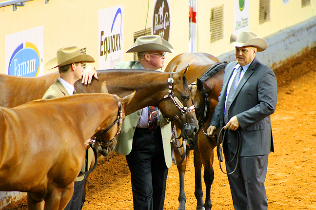 Join Equestrian Professional For Live Horse Business and Marketing Q&A Online Session