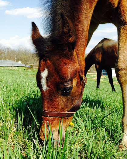 EC Foal Photo of the Day: At Last!