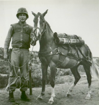 Find Out More About The Horse That Was a Marine…