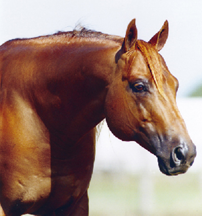 What Does a $10 Million Sire Look Like?