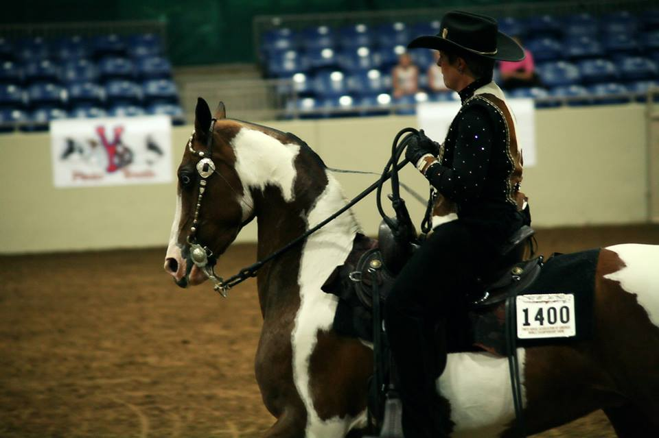 Day 3 Photos and Results From 2014 Pinto World Show