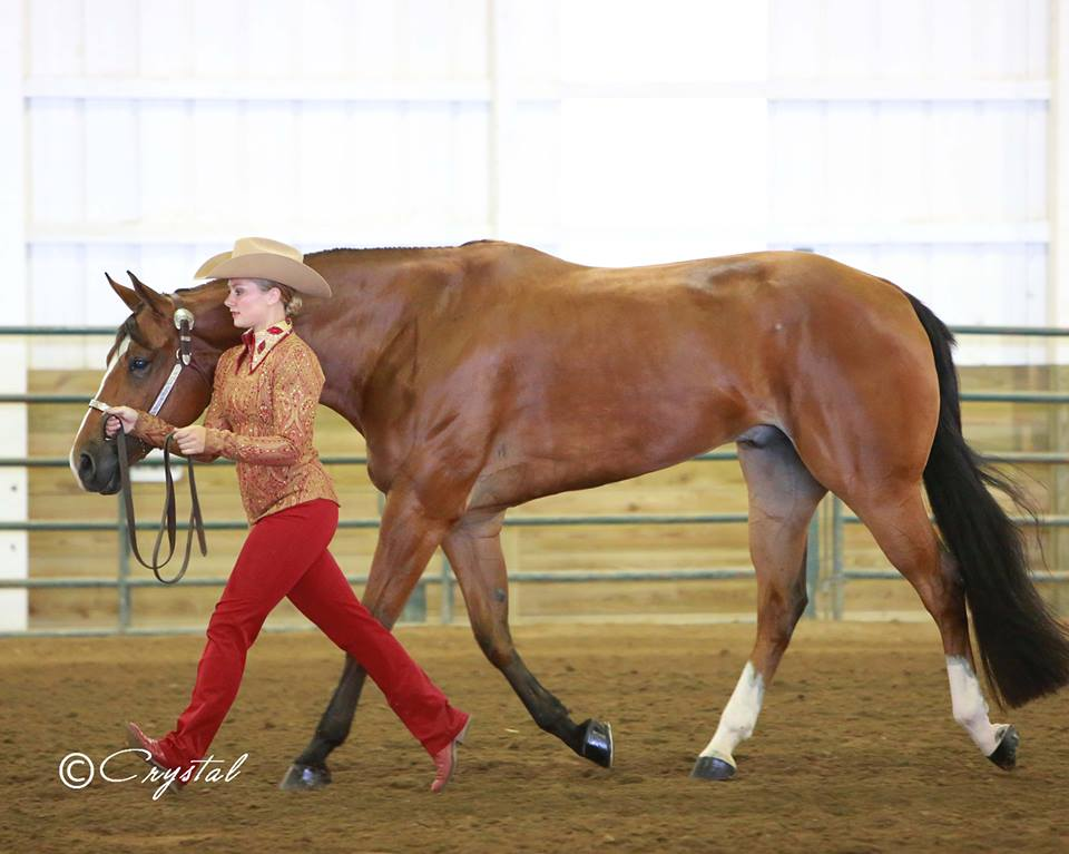 2014 Around the Ring Photos From IQHA State Show