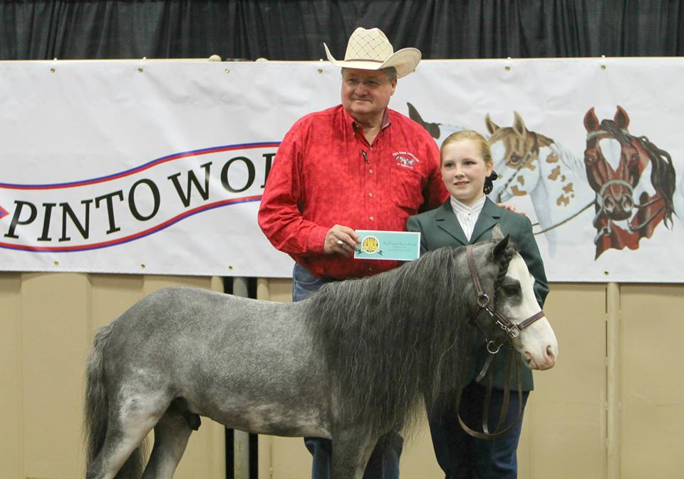 Day 2 Photos and Results From 2014 Pinto World Show
