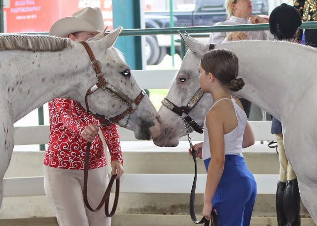 2014 Around the Rings at GQHA's Novice May Shows