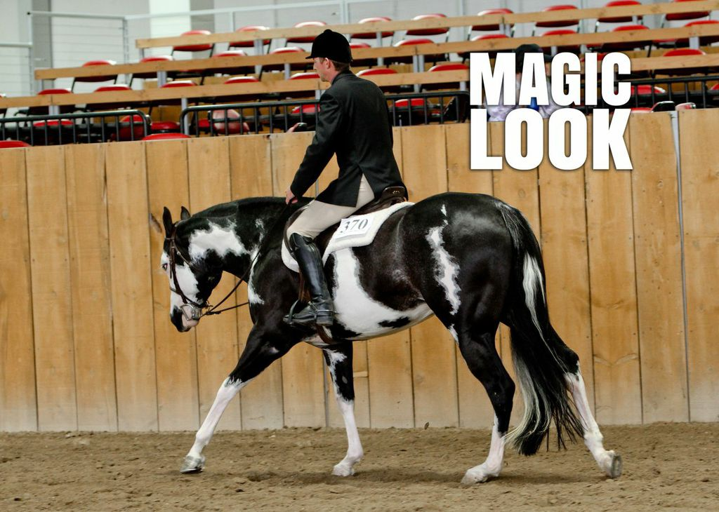 "Around the Ring Photos at 2014 ""Everything But the Kitchen Sink"" APHA POR"