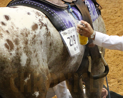 8 Tips For Practicing Non Toxic Fly Control For Horses