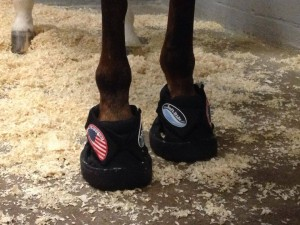 All of the horses flying to Normandy wore Soft Ride Boots to help cushion the amount of time they'd be on their feet during the flight. Photo courtesy of Silver Spurs Equine.