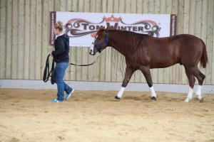 Cash stretches his legs with his groom at Jay Kay Farm before the riders arrive. Photo courtesy of Tom McCutcheon's Virtual Horse Help.