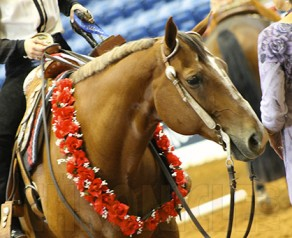 Get Ready… the Equine Chronicle Color Classic 2-Year-Old Open Western Pleasure is Tonight!