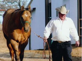 Halter Horse Industry Legend, Mr. Yella Fella, Has Passed Away at Age 19