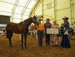 2014 East Coast Halter Futurity Photos and Results