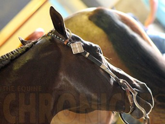 Getting the Most From Your Equine Mortality Insurance: Part 2