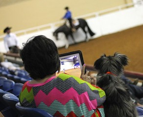 Live Feeds Coming From High Roller Reining Classic, WCHA Breeders' Championship, and Upcoming Quarter Congress on iEquine